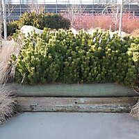 bush plants 1