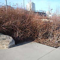 ground plants 2