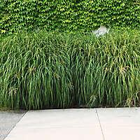 plant bush