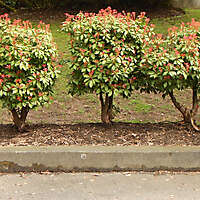 shrub with red flowers