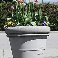 tulips round vase