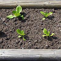 vegetables planter