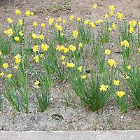 yellow flowers 1