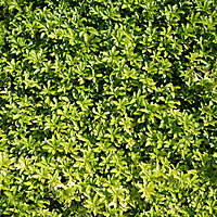 green leaf bush