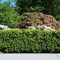 park shrub