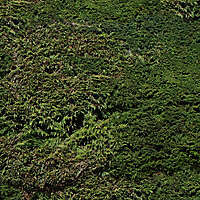pine bush detail