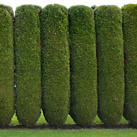 pines fence alpha