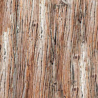 bark brown huge