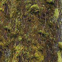 mossy bark 2