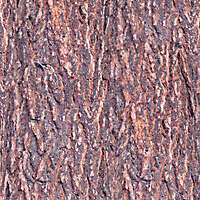 pine bark red