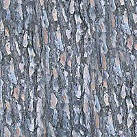 pine bark wood