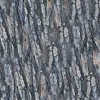 pine bark wood 2