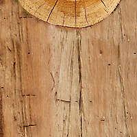 wood log cut