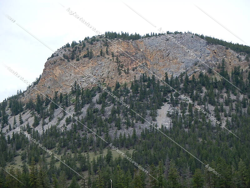 pines tree mountains background 3
