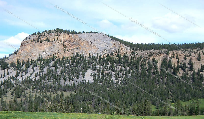 pines tree mountains background 7