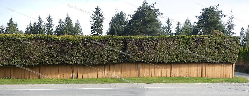 old fence and shrub 2