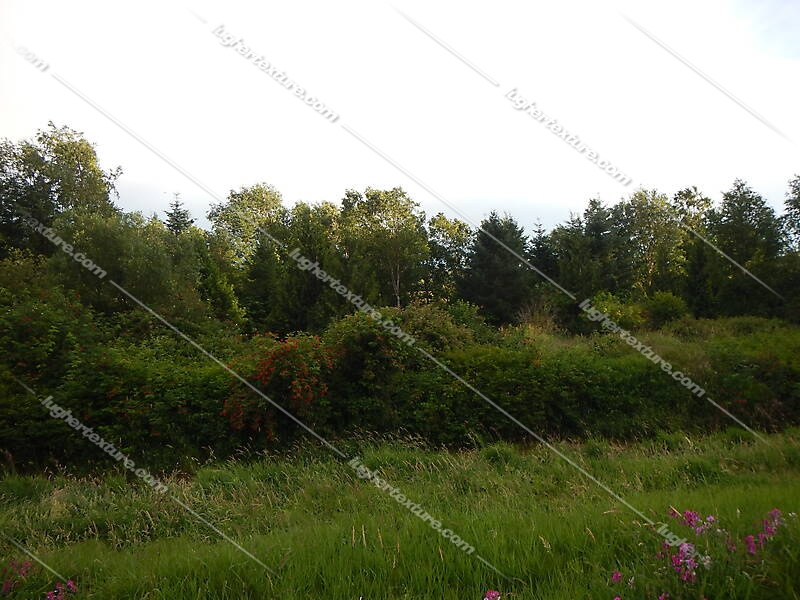 vegetation background