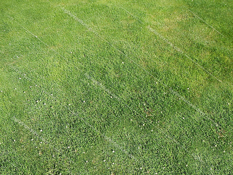 big perfect grass prospective projection map