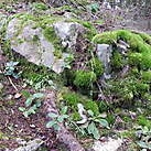 white rock with moss<br />5